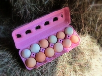 A Variety of Naturally Colored Eggs in Every Carton!